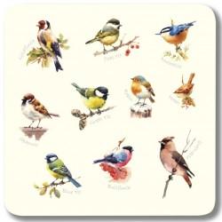 Garden Birds Single Set of 6 Square melamine coasters