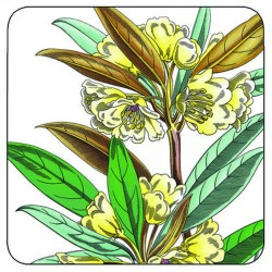 Pimpernel Stafford Blooms drinks coaster yellow